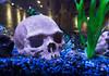 Yorick's Tropical Vacation (Jay:Dee) Tags: 2018topwrs topw toronto photo walks aquarium skull ornament gravel blue