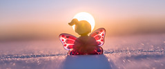 24/52 - Hope (Reiterlied) Tags: 1835mm angle aria butterfly d500 dslr lego legography lens minifig minifigure nikon photography reiterlied sigma snow stuckinplastic sunset toy wide winter