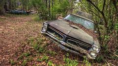 Holding Hope (Wayne Stadler Photography) Tags: georgia preserved retro abandoned classic rustography automotive overgrown vehiclesrust rusty junkyard vintage oldcarcity rustographer derelict white
