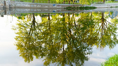 Evening Light Reflection On Nicolet River (guysamsonphoto) Tags: guysamson sonyalpha7rmkiii sony90mmf28macro victo victoriaville reflections rivière river rivièrenicolet rivièreduquébec