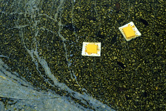 Cracker Rafts (DarlingJack) Tags: cheese cheeseandcrackers crackers rafts floating rafting stream puddle floatingonwater cheddar cheeseslices saltine outdoors surreal absurd snacks litter outofplace