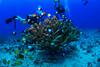West Oahu Dive Coral (Graham Gibson) Tags: hawaii oahu island diving west underwater wide rx100ii acquapazza housing ys01 seasea uwl04