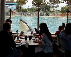 Lunch with Orca (Prayitno / Thank you for (12 millions +) view) Tags: konomark orcinus orca killer whale lunch audience perform performance sw sea world sd san diego ca california outdoor activity day time special