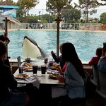 Lunch with Orca thumbnail
