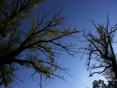 dark (Darek Drapala) Tags: dark mood mystery mystic trees sun sky silhouette skyskape sunset nature natural panasonic poland polska panasonicg5 plants lumix light