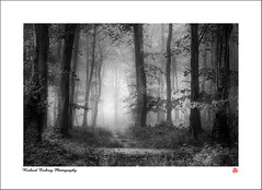 Forest Light (Chalky666) Tags: tree trees wood woodland forest fog mist southdowns westsussex landscape art mono