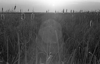 Nikon F2 Photomic (1971) – Kodak Tri-X 400 – Great Salt Lake Shorelands Preserve – Layton, Uta
