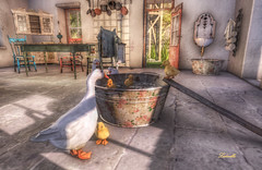 Country life (Ladmilla) Tags: sl secondlife duck ducks bird birds house houses rustic country kitchen water basin bowl bowls basins mystictimbers kitchens