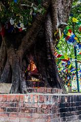 Nepal 2018_-136 (sandmilk) Tags: nepal lumbini buddha birthplace