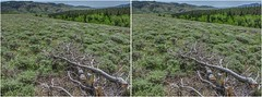 Mountain Park (turbguy - pro) Tags: 3d crosseye stereo laramie wyoming medicinebownationalforest