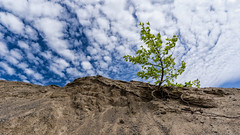 'The Tenacity of Youth' (Canadapt) Tags: tree shrub sand gravel sky clouds panorama up keefer canadapt