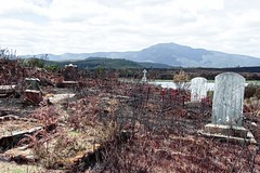 Burnt and forlorn. (taszee63) Tags: tasmania zeehan burnt cemetery abandoned ruins