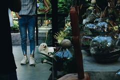 Cutie (valerius94) Tags: streetphotography street lifestyle people swordlake oldquarter hanoi vietnam coffee tea ylang gardenista dog modeling happy