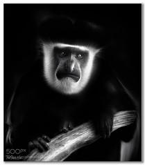 Hello ..... (KevinBJensen) Tags: monochrome mono black white dark animals nature paul keates risu bw portrait