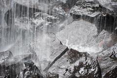 Australia_2018-187.jpg (emmachachere) Tags: subtropical trees hike waterfall boatride springbrook australia rainforest kanagroo animals koala brisbane boat lonepinekoalasanctuary
