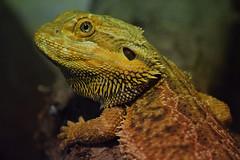@ Zoo de la Barben 29-06-2018 (Maxime de Boer) Tags: reptile reptiel zoo de la barben animals dieren dierentuin gods creation schepping creator schepper genesis