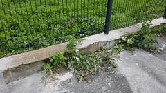 Quartier de la gare :L'entretien du pied de mur du terrain communal