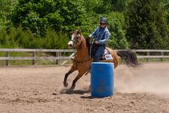 JBC_6392.jpg (Jim Babbage) Tags: krahc bethany appaloosa horses horseshow 2018