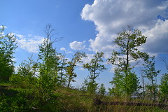 Sparse crowns and cloudscape (МирославСтаменов) Tags: russia mogutova zhiguli tree linden maple birch forest edge cloudscape sky