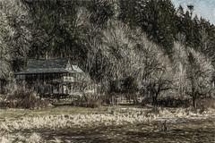 Tucked Away (p) (davidseibold) Tags: america drivebyphotography house hwy101 jfflickr pacificnorthwest painting photosbydavid plant pnw postedonfb postedonflickr tree triton unitedstates usa washington brinnon