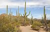 Saguaro Nat'l Park - Mountain District  - 2018 (tonopah06) Tags: saguaronationalpark saguaro cactus cacti az arizona 2018 bajada landscape desertdiscoverytrail trail nature forest desert