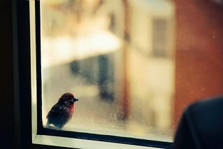 An urban visitor