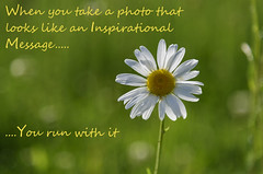 Inspired (David Guidas) Tags: daisy flower sunshine morning message comedy fun greeen nature inspirational