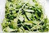 Close up of fresh rucola leaves. Close up.jpg (marcoverch) Tags: spice natural condiment leaf background healthy vegan plant food ruccola pile health fresh herb rocket spring white vitamin vegetarian arugula vegetable up studio sprouts isolated salad raw rukola eating herbal ingredient close rucola freshness salat shot green heap greenery branch organic village rural lighthouse ciel cars pose festival truck boeing españa