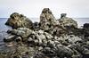 Cyclopean Isles (kimbar/Thanks for 3.5 million views!) Tags: acitrezza basalt cyclopeanisles cyclops italy rockformations sicily