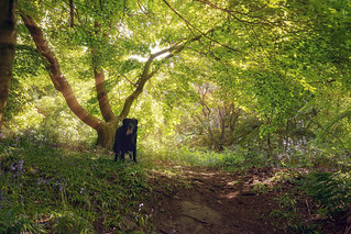 Charlie at Ravelston Woods