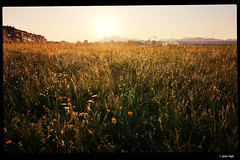 IMG_20180526_063117 (anto-logic) Tags: alba sunset giallo yellows piante flora plants erba grass cielo blu blue sky primavera spring dof profonditàdicampo focus bokeh natura caldo sole italia toscana prato campagna fiori bello azzurro acqua chiara luce rosso fence libertà libero hot winter nature sun italy tuscany countryside meadow flowers beautiful clear light verde green freedom free nice pretty lovely gorgeous fabulous wonderful pov pointofview puntodivista huawei p20pro
