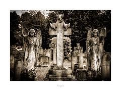 Angels (RichardK2018) Tags: resting gonebutnotforgotten graveyard morbid monochrome dark stonework seraphim derby nottinghamroad rip splittoning ipad adobephotoshopexpress snapseed monument statuary angels cemetery olympusem1mk2 zuiko40150mmf28