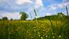 Frühlingswiese (joachim.kracher) Tags: wiese grashalm zeiss batis frühling verschwommen grün green weitwinkel natur bokeh bewölkt fürstenfeld