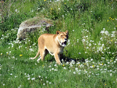IMG_0004 (duncansmith50) Tags: yorkshirewildlifepark lions polar bears black rhino tigers giraffes doncaster