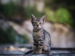 Street cat 203