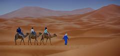 Camel Riding (maios) Tags: camelriding camel riding merzouga morocco africa desert sanddunes sand dunes maios nikond7100 nikon d7100 blue beduin meknestafilalet sky women man reddesert red