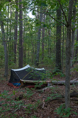 Eclipse Camp - Mark Twain National Forest - Berryman / Ozark Trail (Ozarks Walkabout) Tags: camping marktwainnationalforest gsa missouri tent forest wildcamping trees solareclipse2017 ozarktrail fujifilmxe2s backpacking berrymantrail muthahubbatent potosi unitedstates us