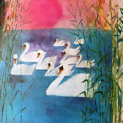 Swans. (Kultur*) Tags: vintage vintagebook vintageillustration drawings illustrations brianwildsmith wildsmith picture book childrensbook firstedition animals 1960s birds birdbook