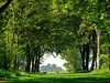 A beautiful day in the woods (peeteninge) Tags: woods forrest trees tunnel green nature bos bomen natuur fujifilmxt2 fujifilm xf80mmf28