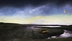 From Iceland. (Tóta. 27.12.1964.) Tags: landscape clouds birds grass water iceland ísland kjalarnes