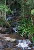 Australia_2018-241.jpg (emmachachere) Tags: subtropical trees hike waterfall boatride springbrook australia rainforest kanagroo animals koala brisbane boat lonepinekoalasanctuary
