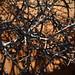 the arid thorns