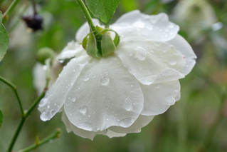 Smile on Saturday: Flower's bottom