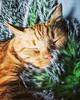 Keeping cozy while napping! #napping #nappingkitty #catnap #sleepykitty (tiina2eyes) Tags: keeping cozy while napping nappingkitty catnap sleepykitty ifttt instagram