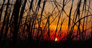 sunset, tall grass