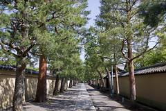大徳寺 Ditoku-ji Temple (ELCAN KE-7A) Tags: 日本 japan 京都 kyoto 大徳寺 daitokuji temple 新緑 fresh greenery ペンタックス pentax k3ⅱ 2018
