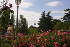 La rosaleda de Madrid (J.vier) Tags: meike35mm roses sony nex mirrorless flowers flores rosas árboles trees green verde azul vegetables teleférico cablecar