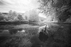 Afternoon by the River (DRCPhoto) Tags: irconverteddslr canon5d digitalinfrared digitalir cheatriver westvirginia sigma1224mmdghsm