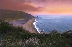 Convergence (Sapna Reddy Photography) Tags: sea sunset landscape flowers wildflowers twilight sky grass ocean pacific klamath estuary river water beach coast coastal california bluff shore riverbank