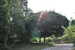 Київ, Ботанічний сад імені Фоміна Ukraine InterNetri 20